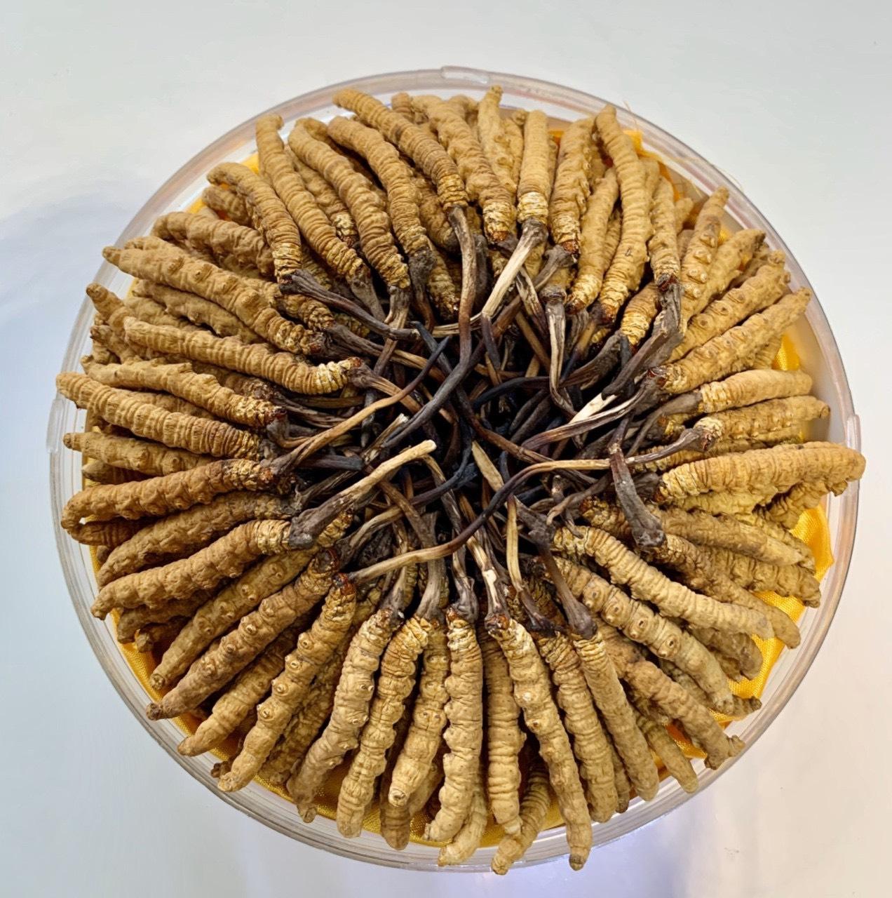 Con đông trùng hạ thảo Na Khúc Tây Tạng 40 con/10gr