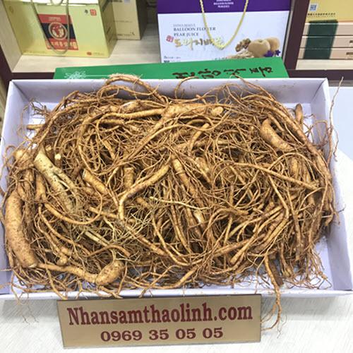 Rễ sâm tươi hàn quốc 1kg